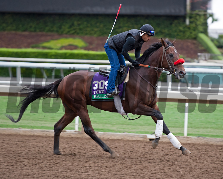 Ralis<br /> Works at Santa Anita in preparation for 2016 Breeders' Cup on Oct. 30, 2016, in Arcadia, CA.