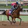 Masochistic with Mike Smith, Sprint<br /> Works at Santa Anita in preparation for 2016 Breeders' Cup on Oct. 29 2016, in Arcadia, CA.