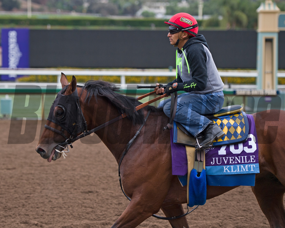Klimt<br /> Works at Santa Anita in preparation for 2016 Breeders' Cup on Oct. 31, 2016, in Arcadia, CA.