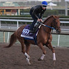 Gun Runner gallops at Santa Anita Nov. 2, 2016 in preparation for his appearance in the Breeders' Cup in Arcadia, California.  Photo by Skip Dickstein