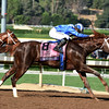 Tamarkuz wins the 2016 Breeders' Cup Dirt Mile<br /> Dave Harmon Photo