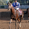 Tamarkuz Mike Smith Breeders' Cup Dirt Mile Chad B. Harmon