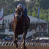 Tamarkuz wins the 2016 Breeders' Cup Dirt Mile<br /> Skip DIckstein Photo