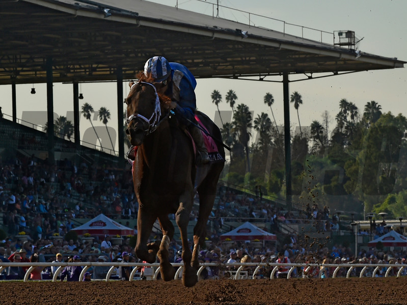 Tamarkuz with Mike Smith wins the Breeders' Cup Dirt Mile (GI) at Santa Anita on November 4, 2016. <br /> Skip DIckstein Photo