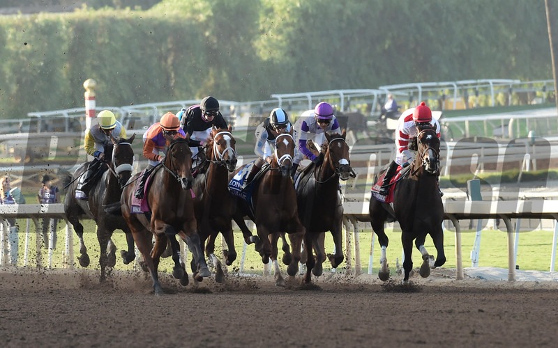 Gary Stevens guides Beholder up the outside of the field on the way to the win in the Breeders' Cup Distaff at Santa Anita Nov. 4, 2016 in Arcadia, California.  Photo by Skip Dickstein