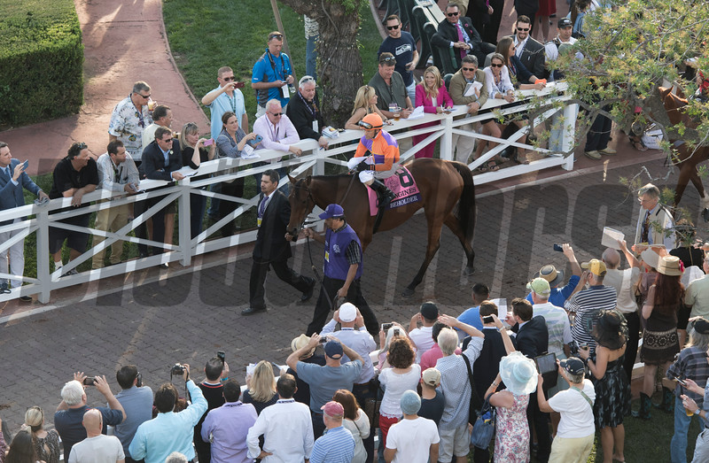 Beholder and Gary Stevens in the paddock before winning the Longines Distaff (gr. I) at Santa Anita on Nov. 4, 2016, in Arcadia, California.