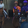 Gary Stevens guides Beholder up the chute to the main track and the win in the Breeders' Cup Distaff at Santa Anita Nov. 4, 2016 in Arcadia, California.  Photo by Skip Dickstein