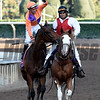 Gary Stevens jubilates on Beholder, left after winning the Breeders' Cup Distaff at Santa Anita Nov. 4, 2016 in Arcadia, California.  Photo by Skip Dickstein