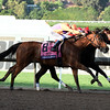 Beholder wins the 2016 Breeders' Cup Distaff<br /> Dave Harmon Photo