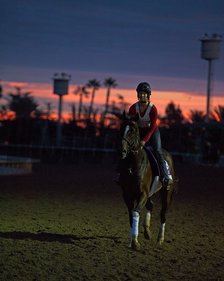 Texas Chrome on track at sunrise. Works at Santa Anita in preparation for 2016 Breeders' Cup on Oct. 30, 2016, in Arcadia, CA.