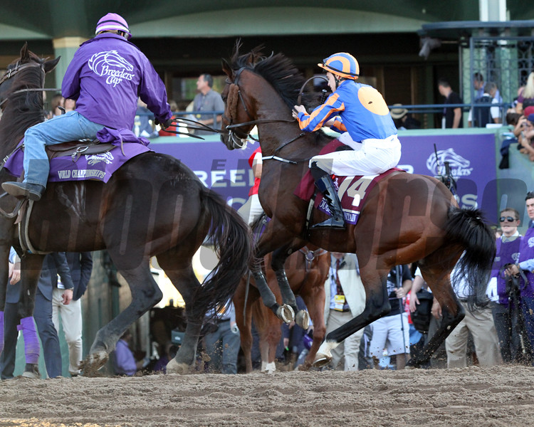 Cougar Mountain Breeders' Cup Mile Chad B. Harmon