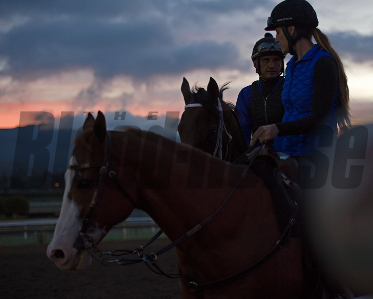 Works at Santa Anita in preparation for 2016 Breeders' Cup on Oct. 31, 2016, in Arcadia, CA.