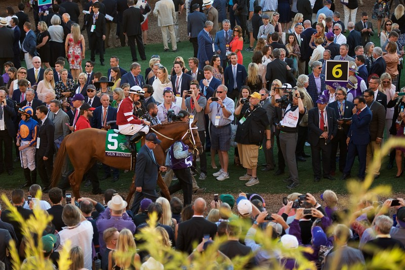 Paddock scenes before the Breeders Cup Classic. Photo by Anne Eberhardt.