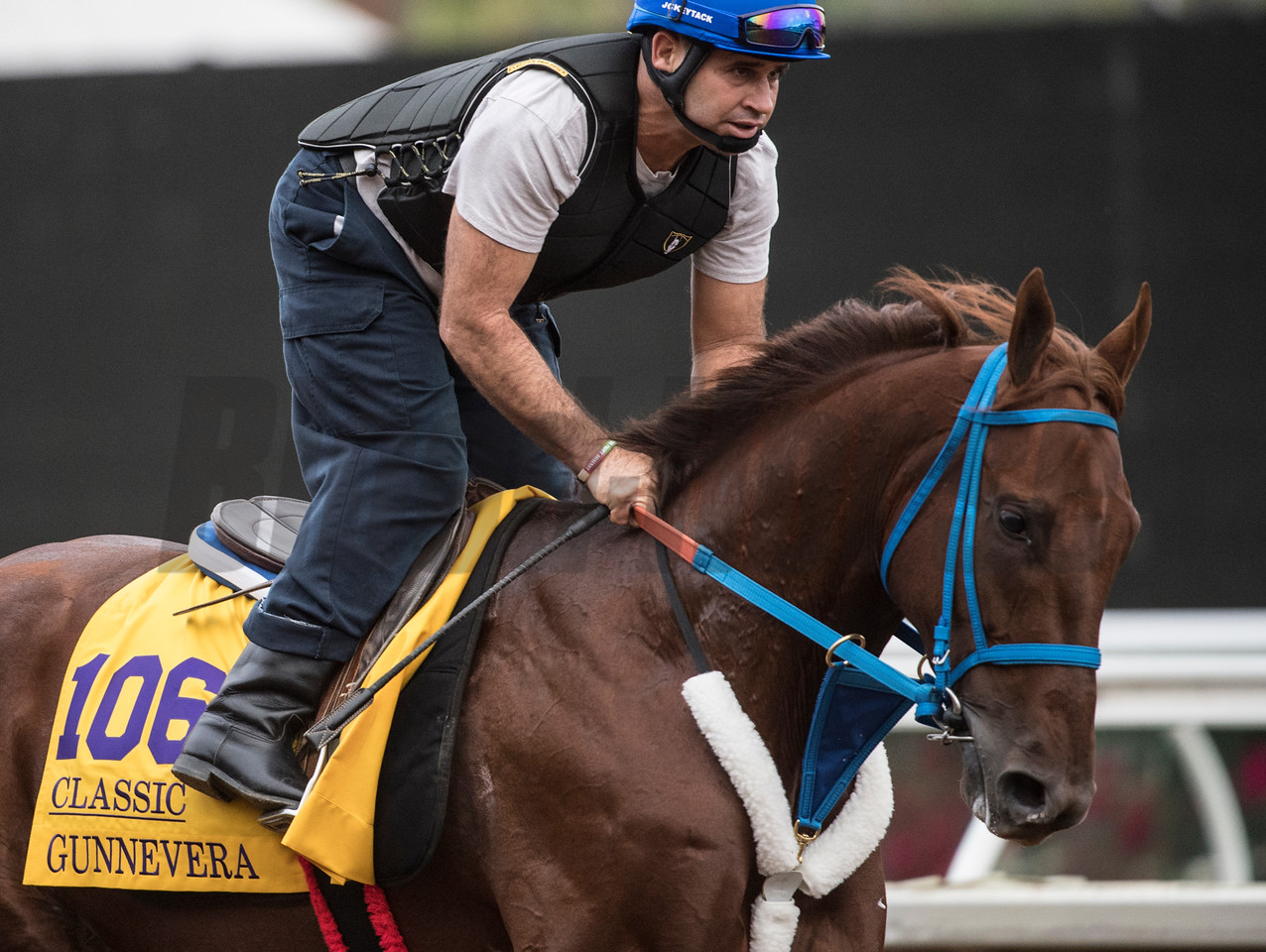 Gunnevera out for morning exercise at Del Mar Nov. 1, 2017.  Photo by Skip Dickstein
