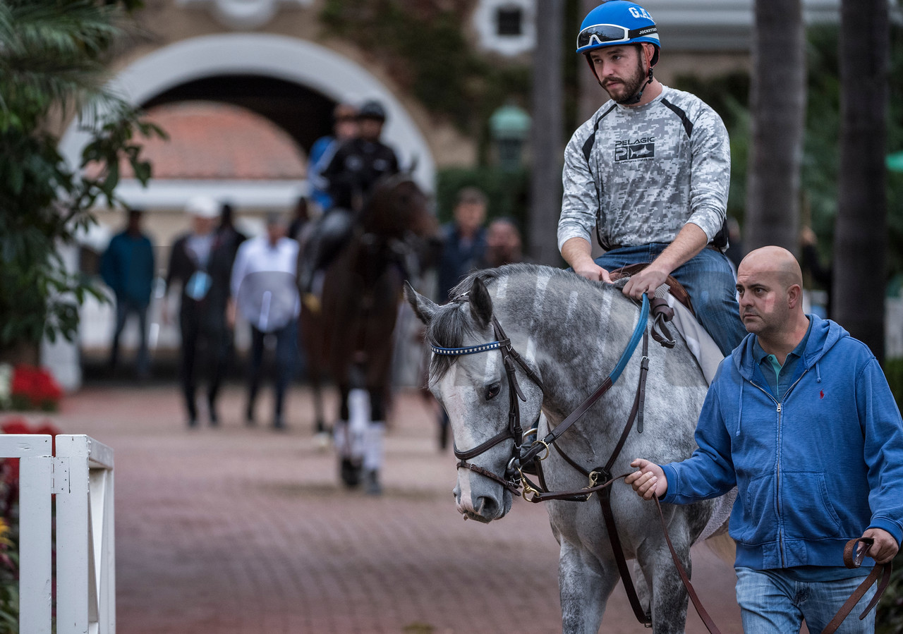 Win The Space out for morning exercise at Del Mar Nov. 1, 2017.  Photo by Skip Dickstein