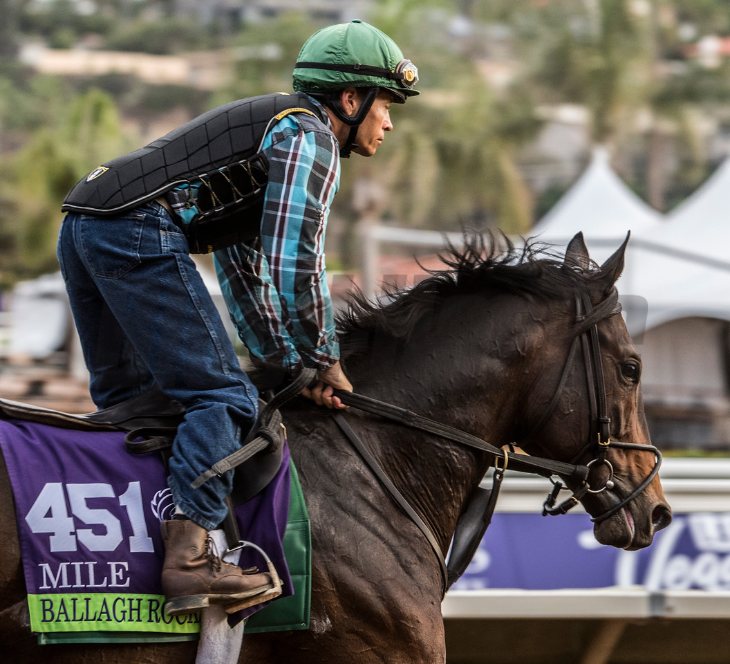 BallaghRocks out for morning exercise at Del Mar Nov. 2, 2017.  Photo by Skip Dickstein