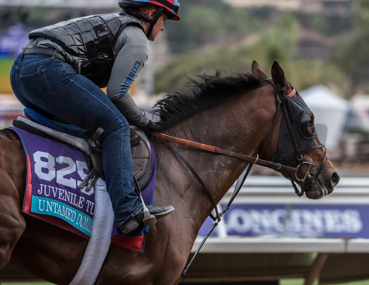 Untamed Domain out for morning exercise at Del Mar Nov. 1, 2017.  Photo by Skip Dickstein