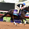 Tap Daddy Breeders' Cup 2017 <br /> Dave Harmon Photo