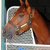 Sadler's Joy Breeders' Cup Del Mar Chad B. Harmon