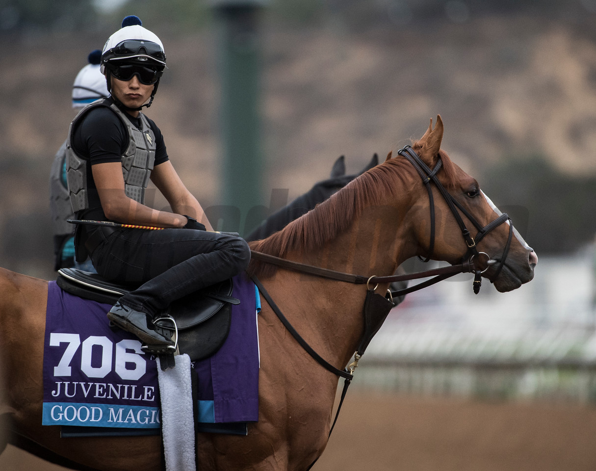 Good Magic out for morning exercise at Del Mar Nov. 1, 2017.  Photo by Skip Dickstein