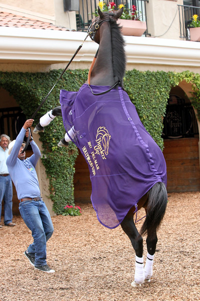 Hollywood Star Breeders' Cup Del Mar Chad B. Harmon