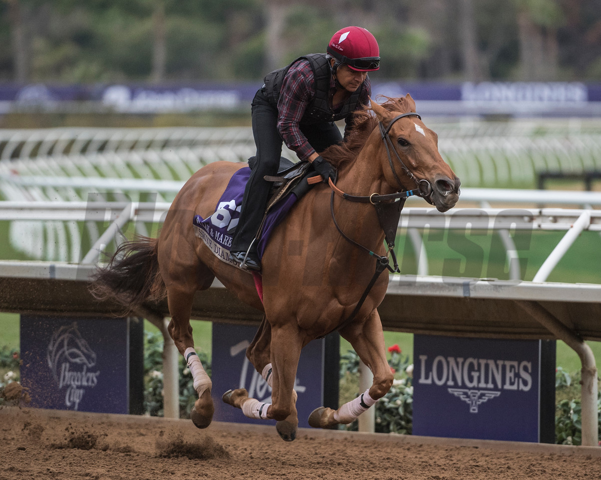 Skye Diamonds out for morning exercise at Del Mar Nov. 1, 2017.  Photo by Skip Dickstein