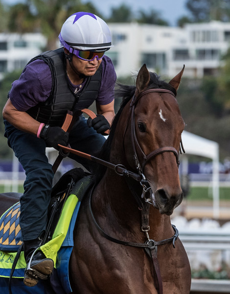 A Baffert Breeders' Cup Trainee out for morning exercise at Del Mar Nov. 2, 2017.  Photo by Skip Dickstein