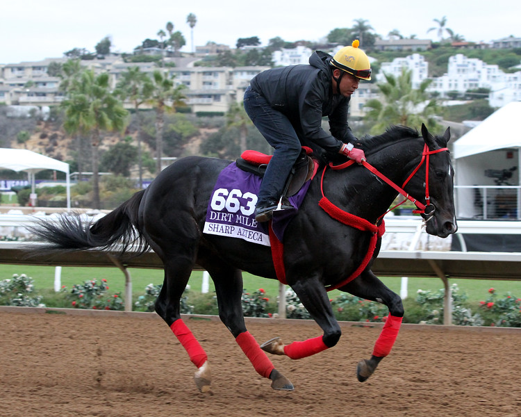 Sharp Azteca Breeders' Cup Dirt Mile Chad B. Harmon