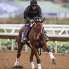 Itsinthepost out for morning exercise at Del Mar Nov. 1, 2017.  Photo by Skip Dickstein
