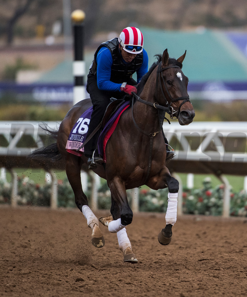 Wonder Godot out for morning exercise at Del Mar Nov. 1, 2017.  Photo by Skip Dickstein