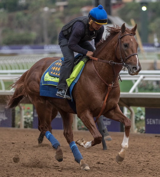 Collected out for morning exercise at Del Mar Nov. 1, 2017.  Photo by Skip Dickstein