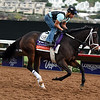 Kitten's Roar  Breeders' Cup 2017<br /> Dave Harmon Photo