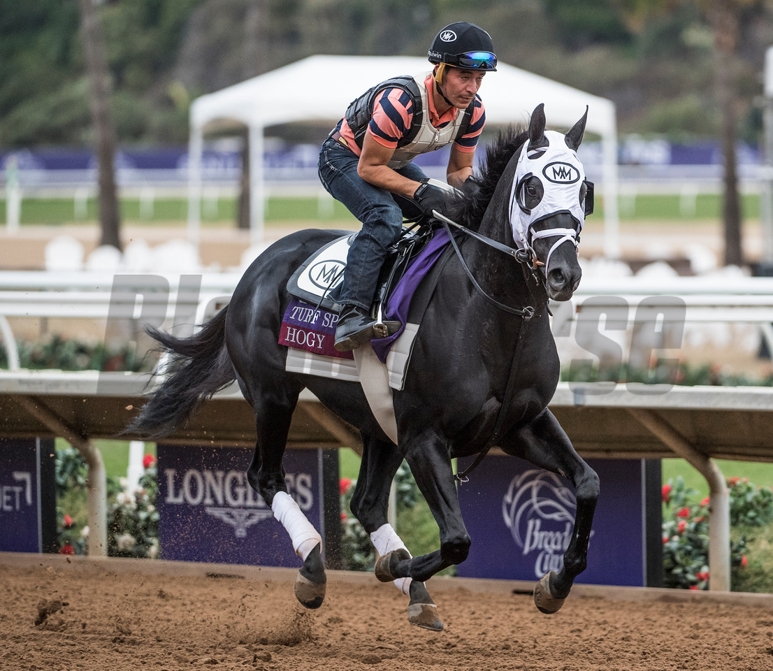 Hogy out for morning exercise at Del Mar Nov. 1, 2017.  Photo by Skip Dickstein