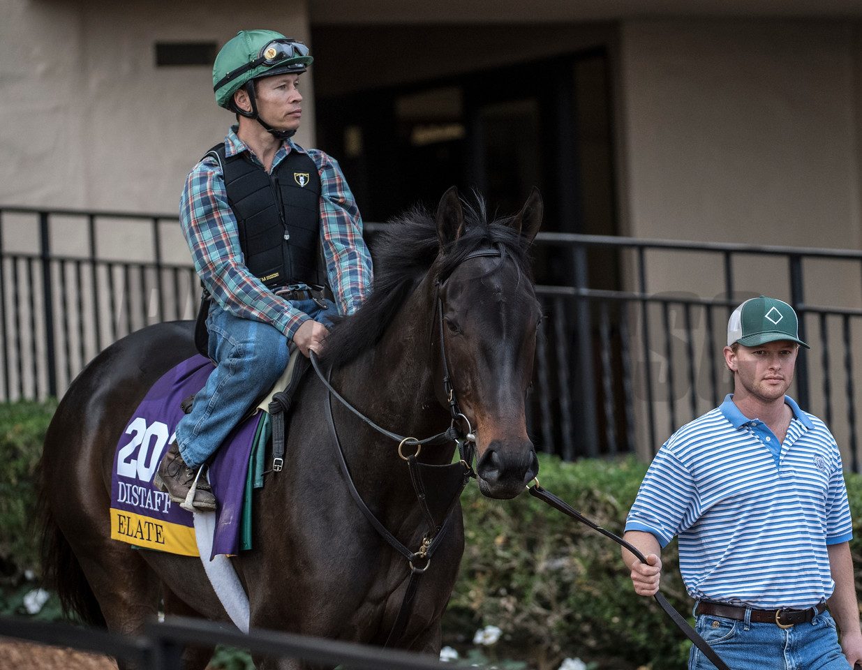 Elate with assistant trainer Reily Mott out for morning exercise at Del Mar Nov. 1, 2017.  Photo by Skip Dickstein
