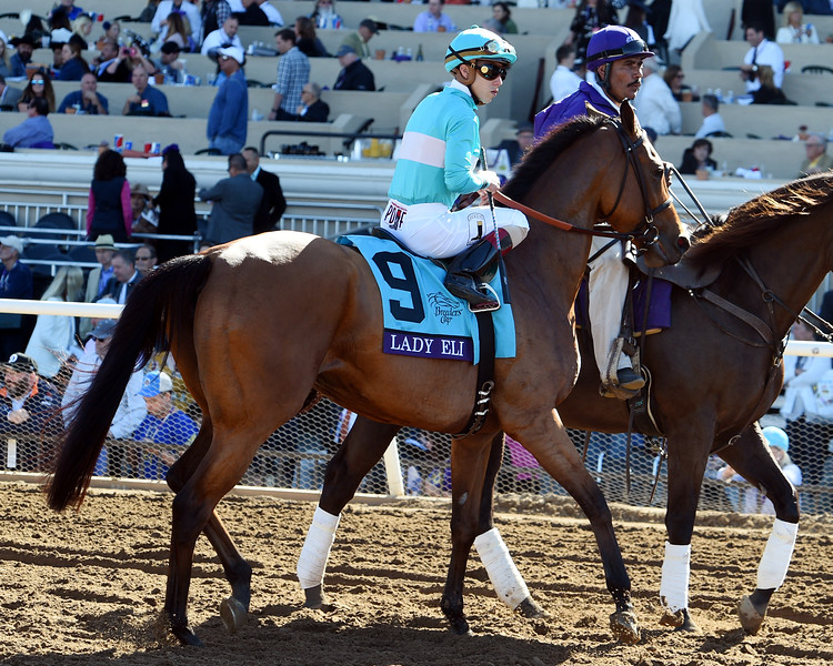 Lady Eli with Irad Ortiz in the post parade prior to the Breeders' Cup Filly & Mare Turf at Del Mar on November 4, 2017<br /> Dave Harmon Photo