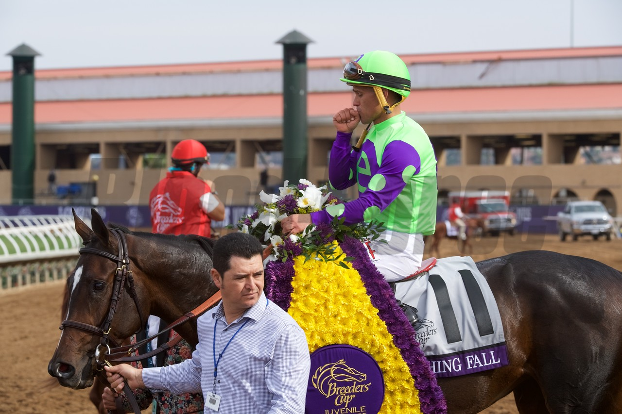 Rushing Fall, Javier Castellano up, wins the Breeders Cup Juvenile Fillies Turf at Del Mar on November 3, 2017. Photo by Skip Dickstein.