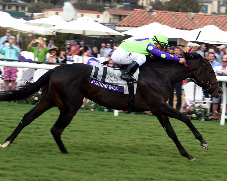 Rushing Fall wins the Breeders Cup Juvenile Fillies Turf at Del Mar on November 3, 2017. Photo by Dave Harmon