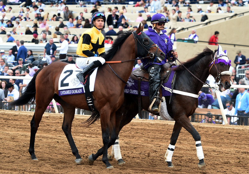 Untamed Domain (2nd) - 2017 Breeders' Cup Juvenile Turf<br /> Dave Harmon Photo