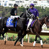 Sharp Azteca before the 2017 Breeders' Cup Dirt Mile<br /> Dave Harmon Photo
