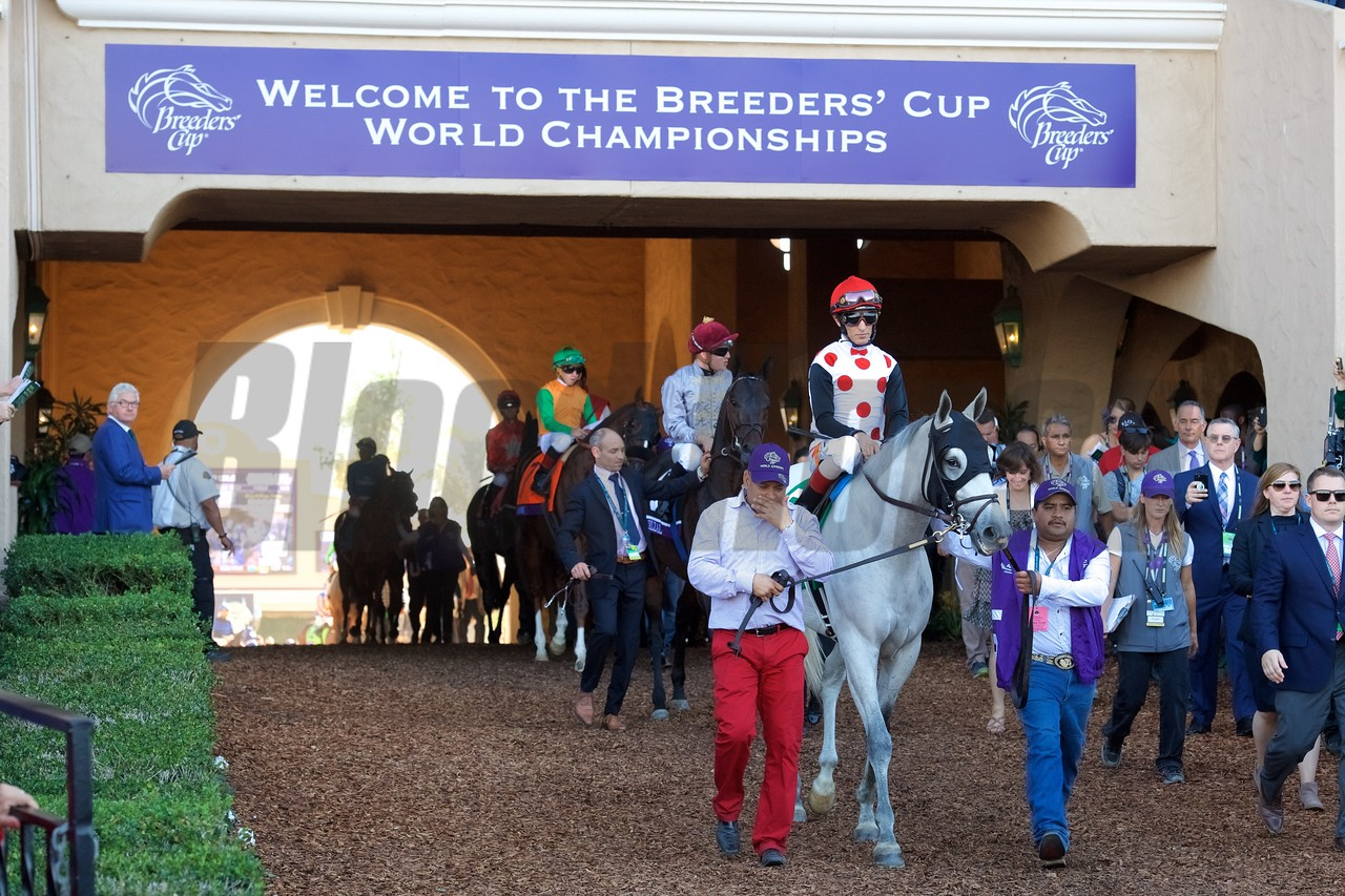 World Approval before the Breeders Cup Mile on November 4, 2017. Photo by Anne Eberhardt