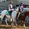World Approval wins the Breeders Cup Mile on November 4, 2017 <br /> Dave Harmon Photo