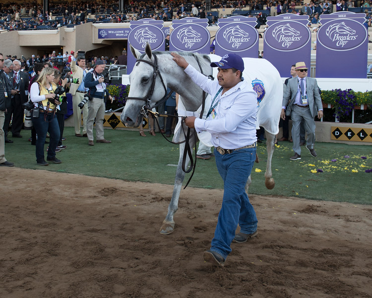 World Approval wins the Breeders Cup Mile on November 4, 2017. Photo by Anne Eberhardt