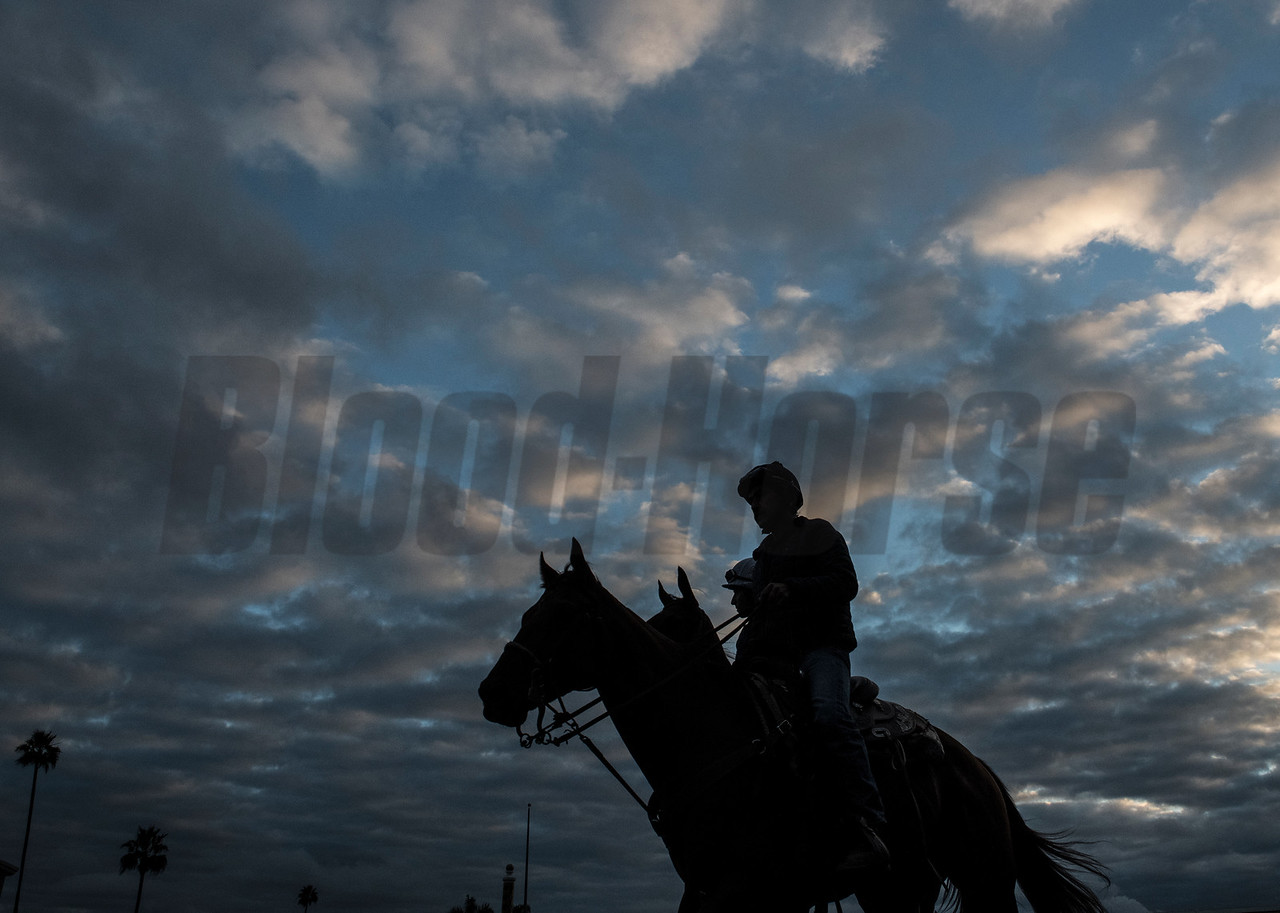 A Breeders' Cup entrant is taken out for morning exercise under a beautiful sky at Del Mar Nov. 2, 2017.  Photo by Skip Dickstein