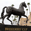 Breeders' Cup Horse Chad B. Harmon