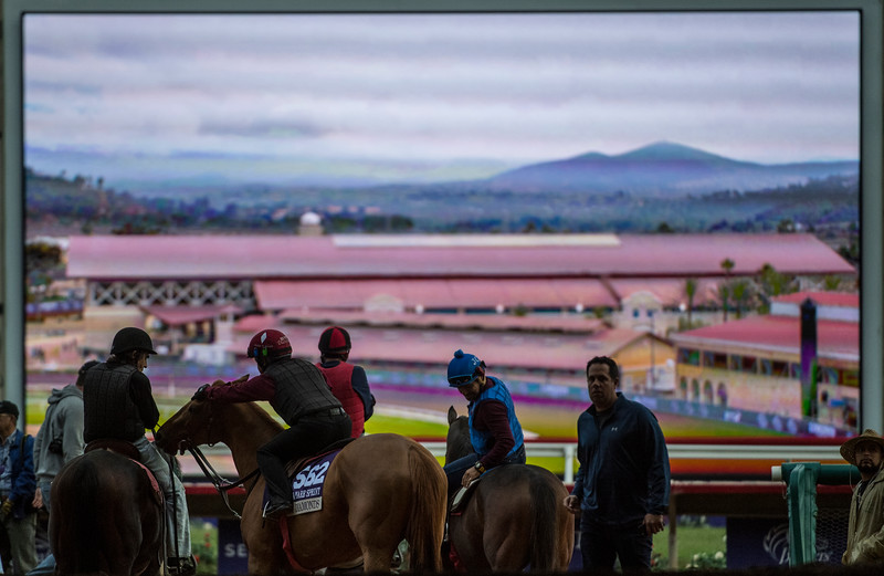 Breeders' Cup entrants wait for the track to open after renovation for morning exercise at Del Mar Nov. 2, 2017.  Photo by Skip Dickstein