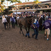 scene, Breeders' Cup, Del Mar Racetrack,  November 4 2107