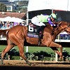 Good Magic wins with Breeders Cup Juvenile on November 4, 2017  <br /> Dave Harmon
