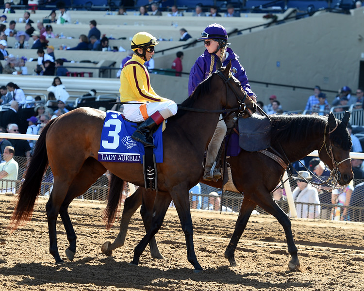 Stormy Liberal wins the Breeders Cup Turf Sprint on November 4, 2017.