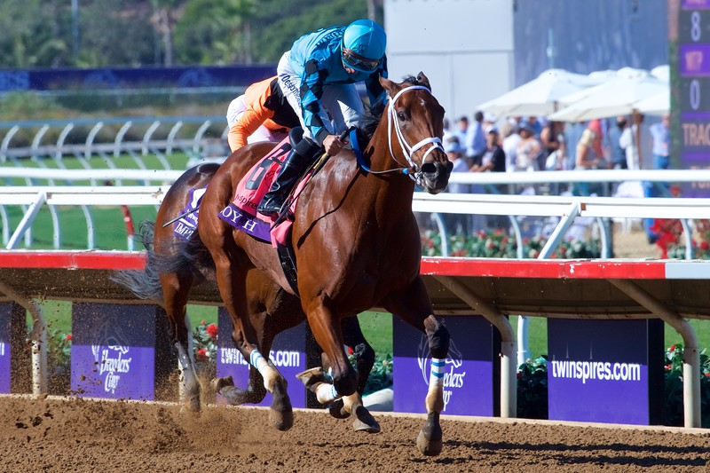 Roy H wins the Breeders Cup Sprint on November 4, 2017. Photo by Skip Dickstein.