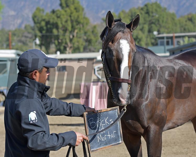 Bricks and Mortar and Santa Anita horse identification team<br /> at  Oct. 29, 2019 Santa Anita in Arcadia, CA.
